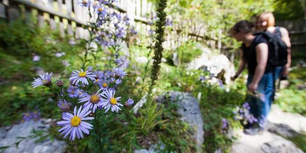 Alpski botanični vrt Alpinum Juliana