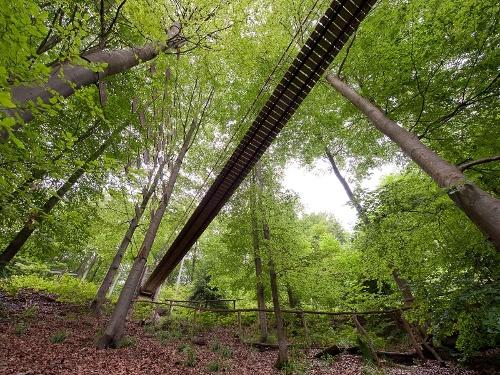 Audioweg am Rothaarsteig- Buchenwälder rund um Schanze