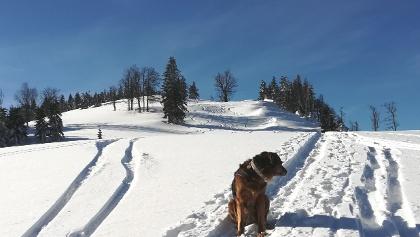 Im Sattel zwischen Tirolerkogel und Ahornberg mit Blick zum Ahornberg