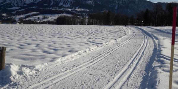 Sonnige Loipe im Großdorfer Feld