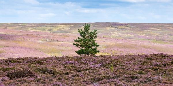North York Moors Countryside near Kildale