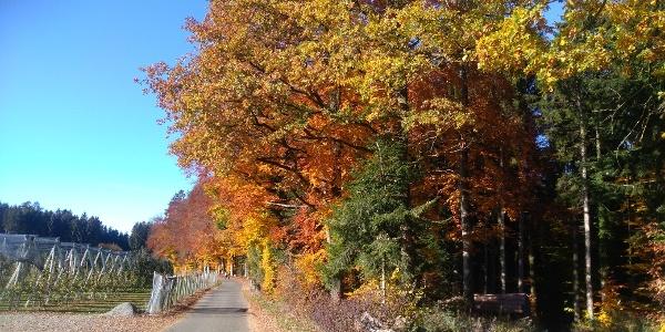 Herbststimmung bei Hengnau