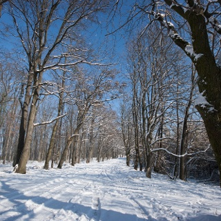 Kardosfa felé
