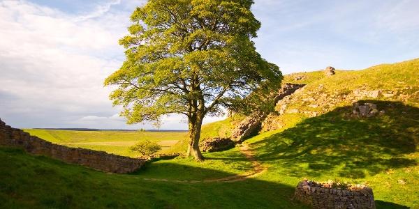 Sycamore Gap - eine der bekanntesten Stellen des Hadrianswalles