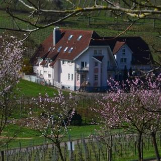 Castell zur Mandelblüte - Spring in Leinsweiler
