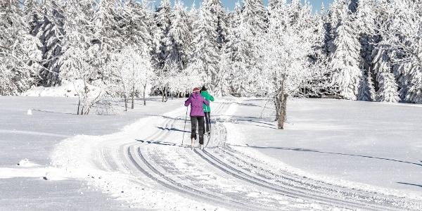 Entlang des Skiwanderweg Rennsteig