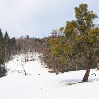 Kurz nach dem Parkplatz - über Wiesengelände hoch in Richtung Schosserhütte