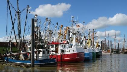 Fischkutter in Ditzum