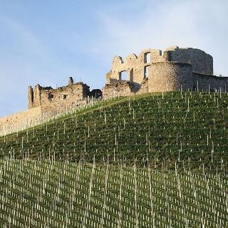 Burgruine Taggenbrunn mit umgebendem Weingarten