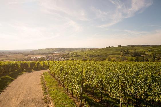 Badischer Weinradweg - Etappe 1 Markgräflerland