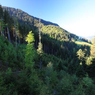 Der Schutzwald Oberstolen ist heute ein stabiler Mischwald. Dieser senkt das Risiko für Waldschäden, fördert Flora und Fauna und schützt das Dorf Schüpfheim.