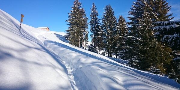 Alp Caspausa in Sicht