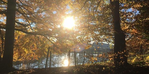 Wald-Spaziergang am Schleinsee