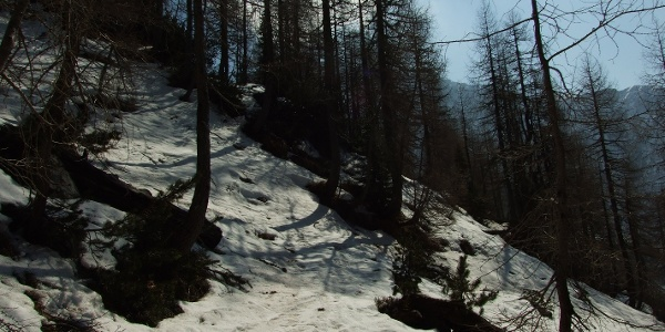 At the tree line - larch forest
