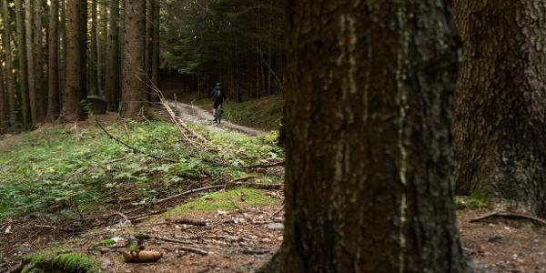 Im Wald Richtung Carobbi