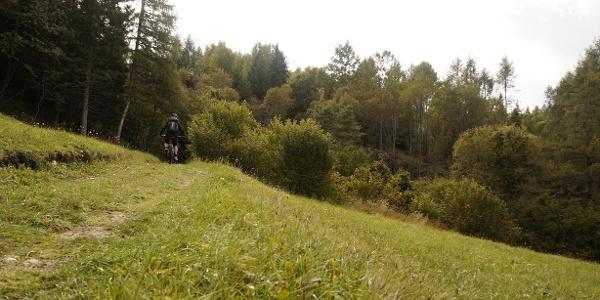 Fall tones on the meadow at Malga Zanga