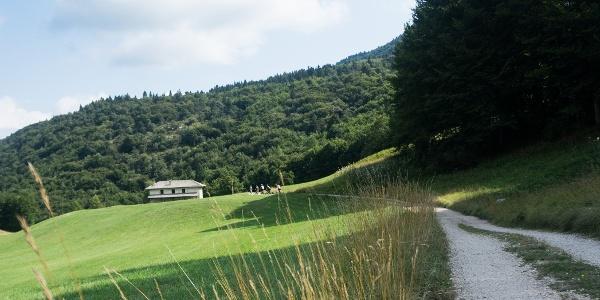 Meadows at Malga Vigo