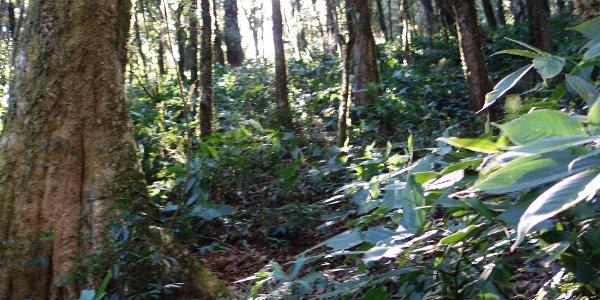 Auf dem nördlichen Bergrücken ist die Wegfindung im meterhohen Unterholz zuweilen nicht einfach