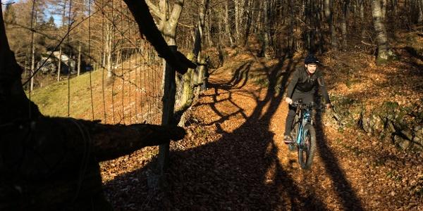 Riding downhill in the woods around Treni