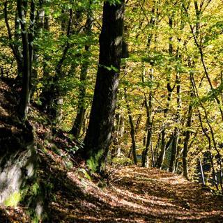 Waldweg Iserbachschleife