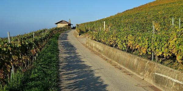 Asphaltweg durch die Weinberge bei Corseaux.