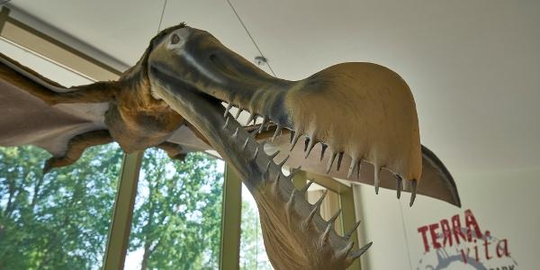 Aus der Kreidezeit: ein lebensgroßes Flugsaurier-Modell hat sein Zuhause im TERRA.vita-Pavillon