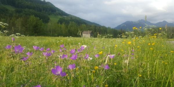 Blumenpracht in Mellau