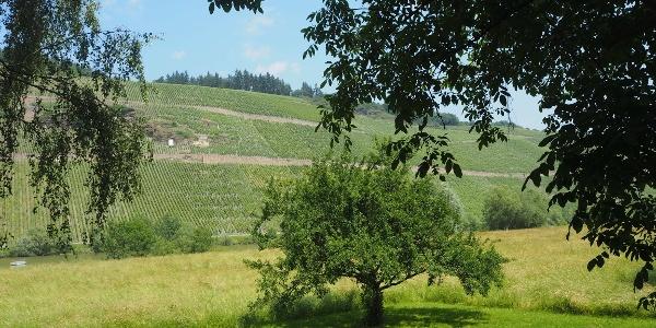 Wiesen und Weinberge um Brauneberg