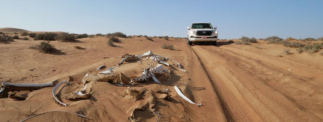 Ein Skelett in der Rimal Al Wahiba Wüste