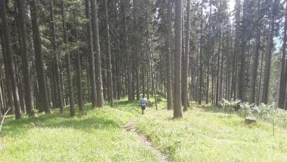 Schöne Waldwege führen durch den Bürgerwald hinauf auf die Scheibe