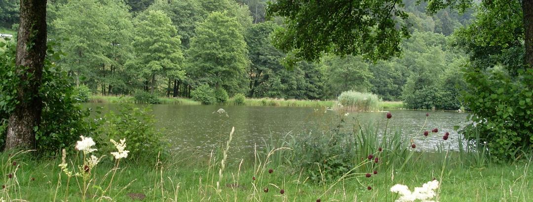 Fischweiher Friedrichstal