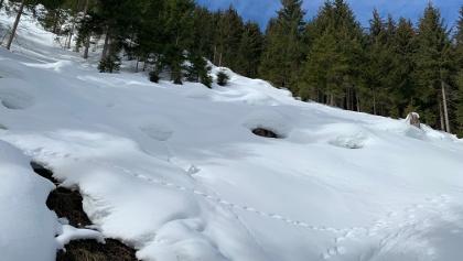 Frühling und Durchfeuchtung bis auf 1500 m