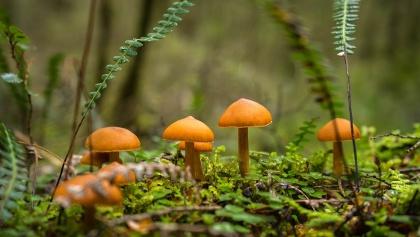 Immergrüner Wald im Fjordland