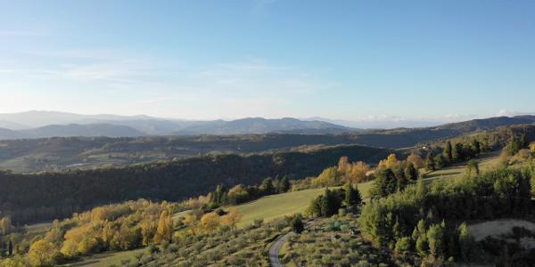Blick nach Westen über Olivenhaine