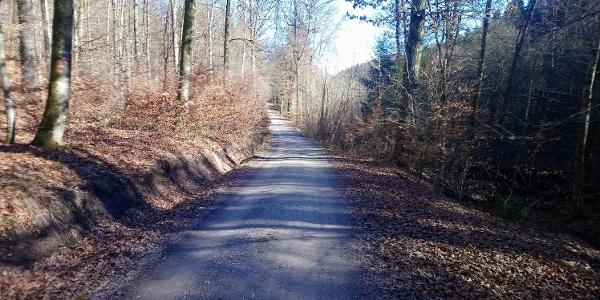 Schönbuch Waldweg Richtung Tal