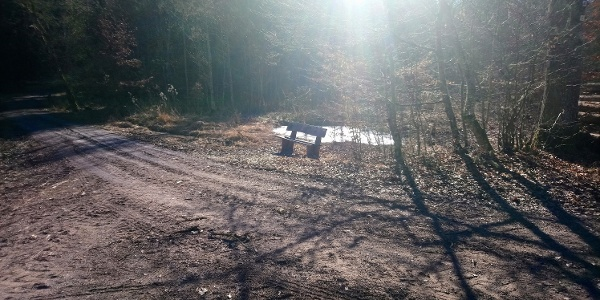 Holzbank mitten im Wald