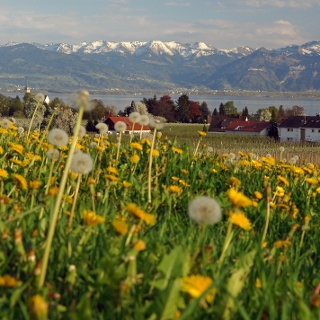 Nonnenhorn-Panorama im Frühling