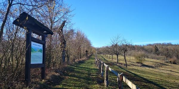 Streuobstwiesen am Schmandberg