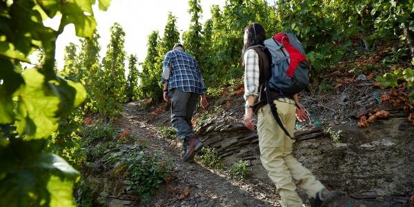 Weinbergswege im Klettersteig
