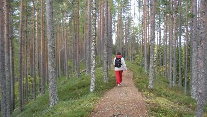 Sininen polku trail in esker