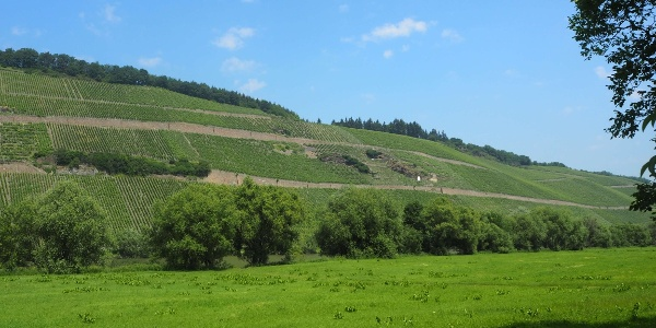 Blick auf die Weinberge in Brauneberg