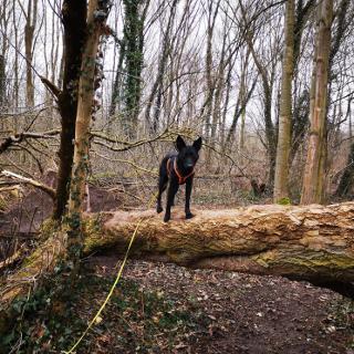 Kletterbaum für Hunde