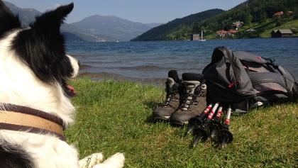 Wandern mit Hund am Alpe-Adria-Trail
