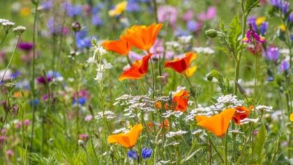 Blumenwiese im Wald hinter dem Grillplatz Reute
