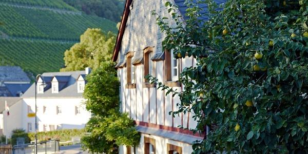 Fachwerkhaus in Burgen