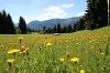 Bergwiese mit Blick auf die Gundhütte - © Quelle: Pfronten Tourismus