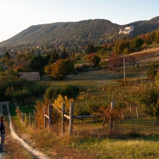 A csókakői vár az arany-hegyi szőlők felől nézve