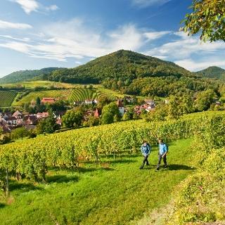 Der Pfälzer Weinsteig im Frühling