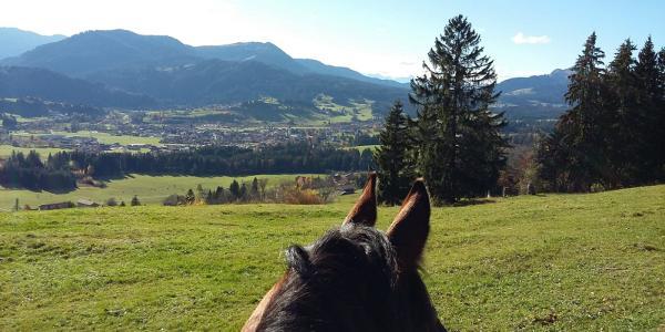 Titelbild Allgäuer Höhenritt mit Allgäuer Alpen im Hintergrund