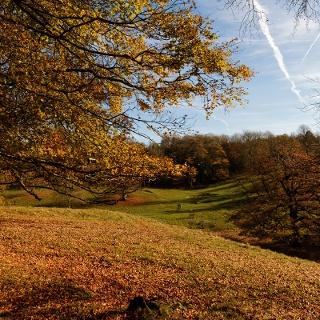 Dyrham Park
